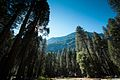 Mountains and Forest in Yosemite National Park.jpg