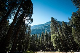 270px Mountains and Forest in Yosemite National Park