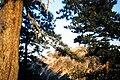 Mt-hua-ForestOfSunrise.jpg