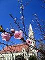 Mužlja blooming-peach-01.jpg