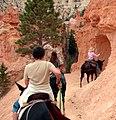Mule Ride, Bryce Canyon, UT 9-2009 (5882140650).jpg