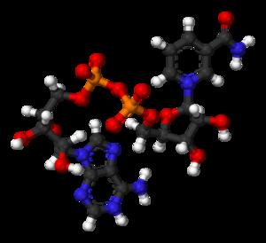 Nicotinamide adenine dinucleotide - Image: NAD+ from xtal 2003 3D balls