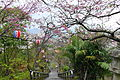 Nago-jyo Park Sakura.JPG