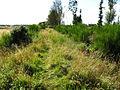 Nairn to Cawdor footpath - geograph.org.uk - 544275.jpg
