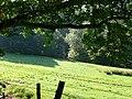 Narrow valley - geograph.org.uk - 978608.jpg