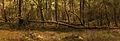Nationaal Park Drents-Friese Wold. Locatie Dieverzand. Dode boom, belangrijke voedselbron in evenwichtig biotoop 06.jpg