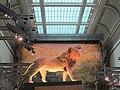National Museum of Natural History, Washington, D.C. (2013) - 07.JPG