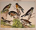 Natural history of the animal kingdom for the use of young people (Plate XV) (5974950856).jpg
