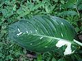 Nature of Langkawi (21).JPG