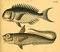 Naturgeschichte in Bildern mit erläuterndem Text (Taf. XLVIII) (6059211990).jpg