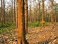 Nedumkayam Reserve Forest, Nilambur - panoramio.jpg