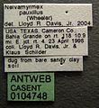 Neivamyrmex swainsonii casent0104748 label 1.jpg