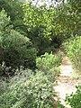 Nesher, Park Nesher, Wadi Katia 129.JPG
