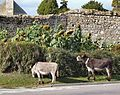 New Forest Life on Beaulieu Abbey.jpg