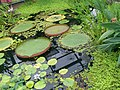 New York Botanical Garden 39.jpg