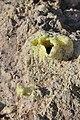 Nisyros Volcano 5.jpg