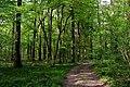 Noironte, le Bois du Breuil (2).jpg