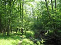 North Fork Quantico Creek Prince William Forest Park.jpg