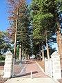 OIC mosman park memorial trees 2.jpg