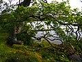Oak - panoramio (14).jpg