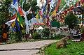 Observatory Hill, Darjeeling (8716414615).jpg