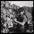 Oct. 1951. La fête du raisin Chasselas à Moissac (1951) - 53Fi4915.jpg