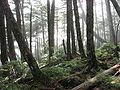 Okuchichibu-Forest 02.jpg