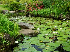 English: A pond with lotuses in Okuma Garden