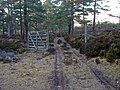 Old Gate, Rothiemurchus Forest - geograph.org.uk - 775409.jpg