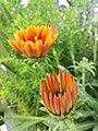 Orange flowers 4.jpg