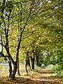 Osdorfer Straße im Herbst - panoramio.jpg