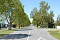 Oxford NZ Tree Lined Street.JPG