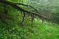 Přírodní rezervace Biely vrch, okres Ilava (04).jpg