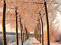 Pad in winter - panoramio.jpg