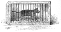 Page 138 illustration in Old Deccan Days.png