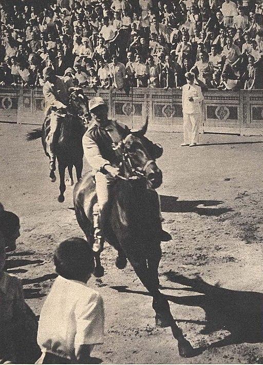 Palio di Siena 1953 a