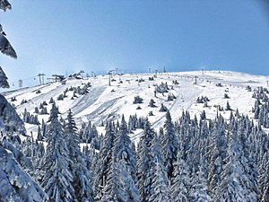 Kopaonik - Pančić's Peak, during winter