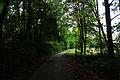 Park przy pałacu w Osieku - widok na drogę do oficyny Ogrody.JPG