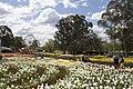 Parkes ACT 2600, Australia - panoramio (3).jpg