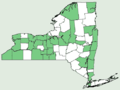 Parnassia glauca NY-dist-map.png