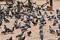 Patan Durbar Square 4302.jpg