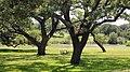 Pedernales River at the LBJ Ranch.jpg
