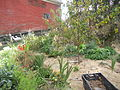 Permaculture garden with a fruit tree, herbs, flowers and vetetables mulched with hay.JPG