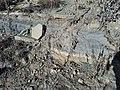 Pfeifer Shale Sugar Sand above a limestone bed 20171230.jpg