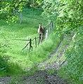 Pferdegaul im Wald - panoramio.jpg