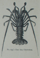 Picture Natural History - No 233 - The Sea Cray-fish.png