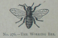 Picture Natural History - No 276 - The Working Bee.png