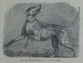 Picture Natural History - No 84 - The Dalmatian or Coach Dog.png