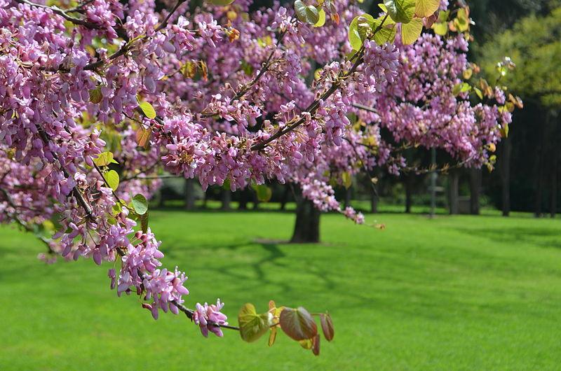 לבלוב ופריחה