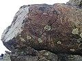 Pillow lava (lave en coussin) Chenaillet Alpes 2.jpg